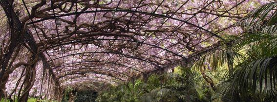 Visita guiada conociendo el Jardín Botánico de La Concepción de Málaga